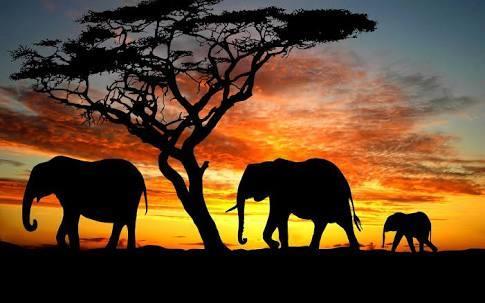 Elephant Researchers