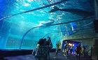 A Special Night in Aquarium Tunnel