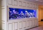 Need to customize acrylic fish tank?