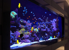 What are the good materials for fish tanks?