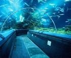 Design Requirements for Aquarium Project Specialty